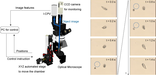 System diagram of the three-dimensional tracking system and photographs of the tracked paramecium.