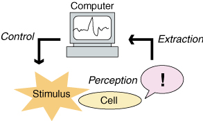 Our concept: Stimuli perceived by a cell is extracted, taken in computers, and decoded.