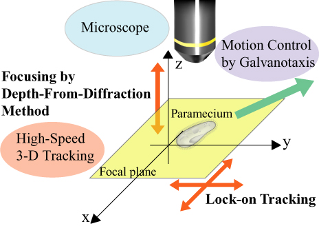 The concept of motion control of microorganisms in three-dimension.