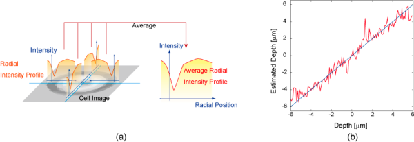 Figure of Radial Intensity Profile and estimation result